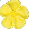 Wild Rose - Yellow - 1""