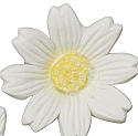 Daisy - Small White - 1.15""
